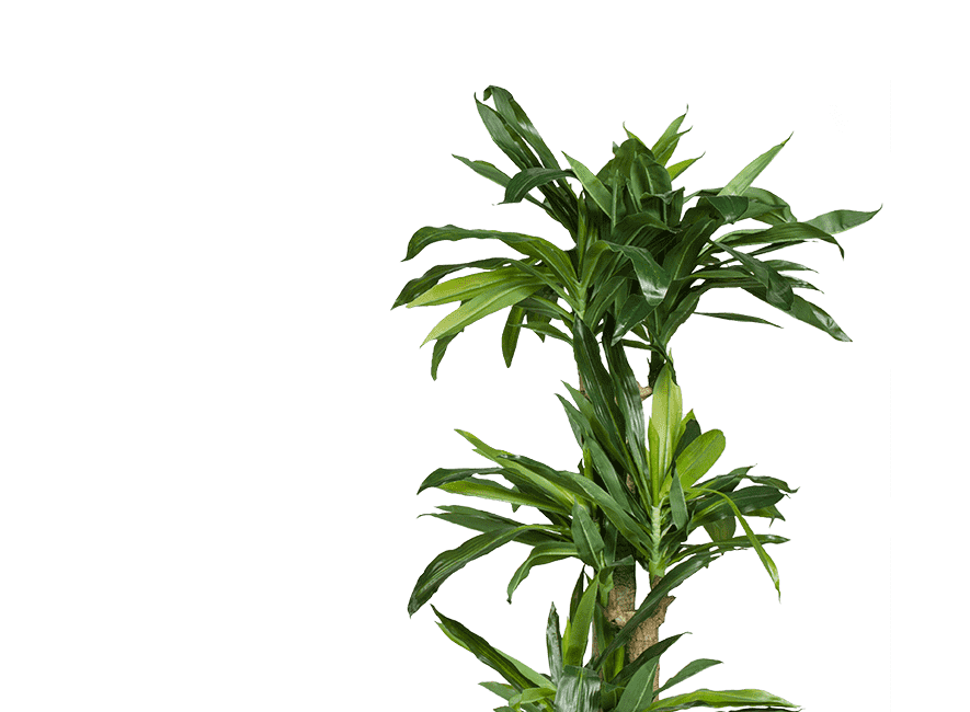 picture of a plant