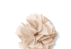 Champagne Carnation Lapel Pin