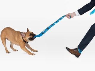 Dog pulling socks