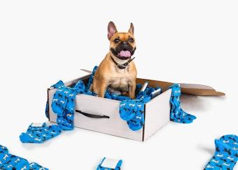 dog in a Generation Tux box full of dog socks