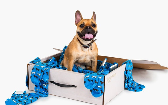 Dog rolling in Generation Tux ASPCA Pup Socks